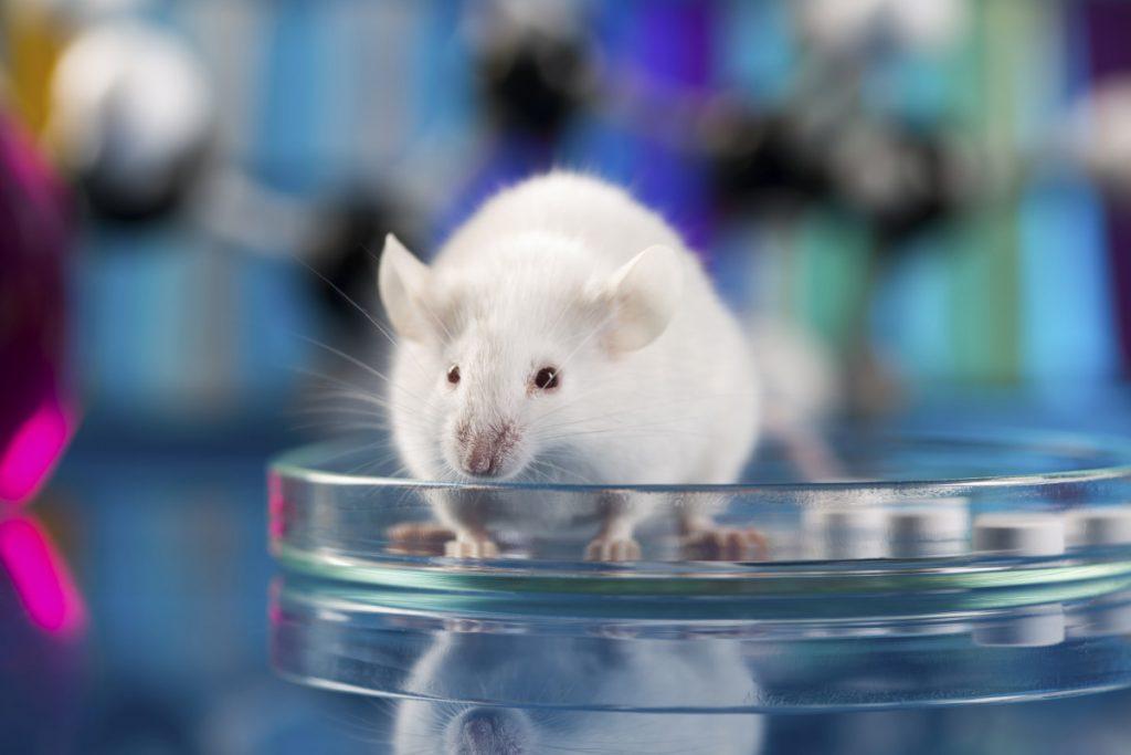 Energiahoidon vaikutus syöpään hiirissä